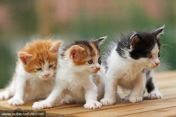 chatons.jpg